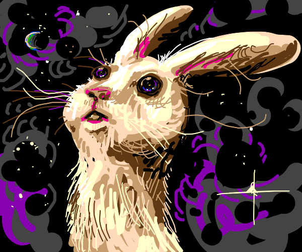 rabbit goes to the moon