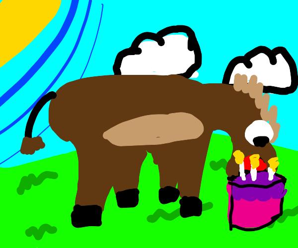 Pony eats cake