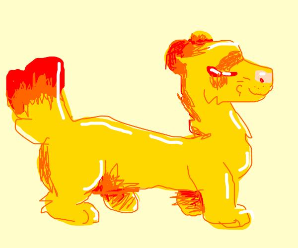 golden ferret