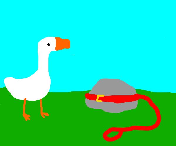 goose meets a pet rock