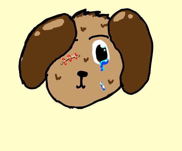 Dog with one eyeball cries