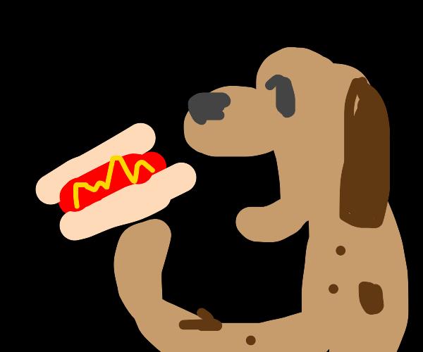 Dog eats (hot) Dog