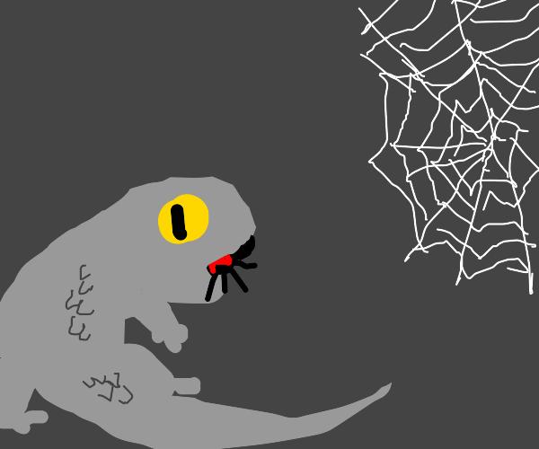 Grey lizard eats a black widow