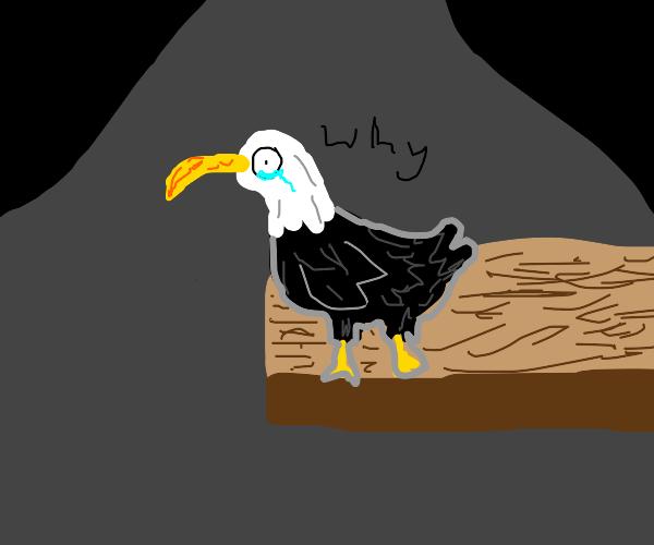 Depressed Bald Eagle