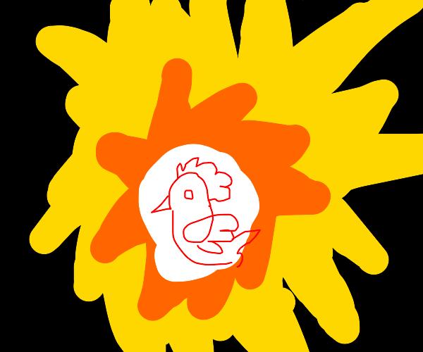 Chicken in the sunshine