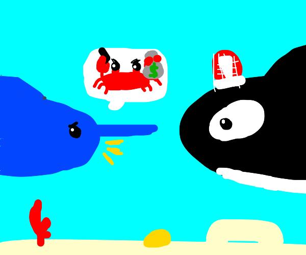 Swordfish accuses crab to orca police