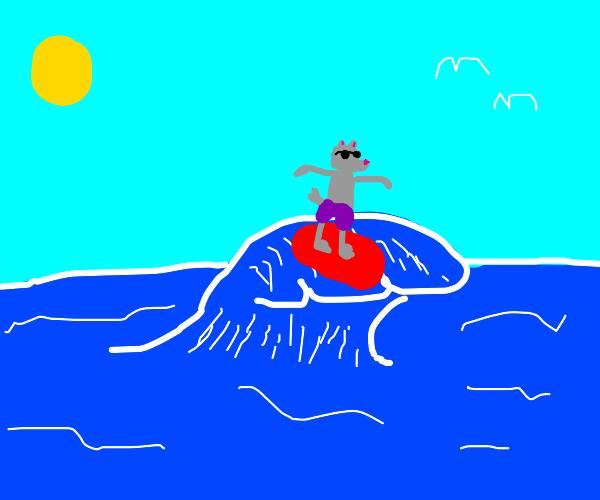 A surfing wolf
