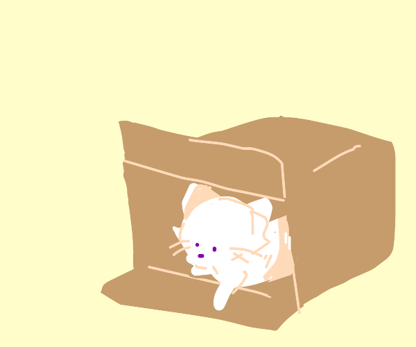 Pretty kitty in a box