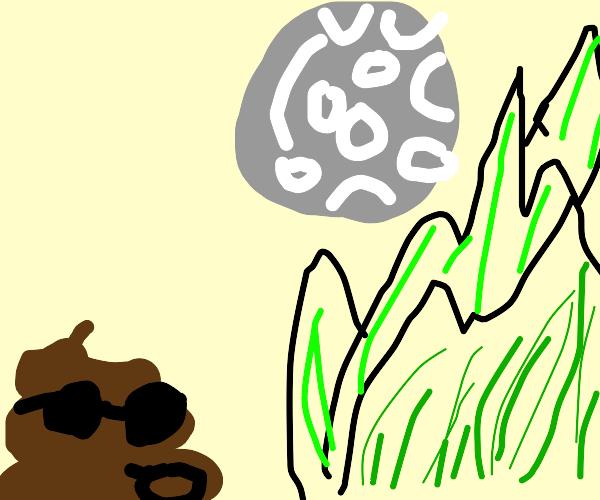 poo enjoying view of mountians