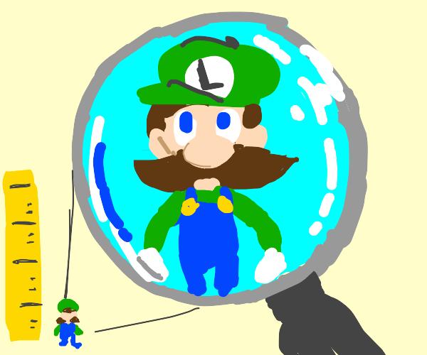 Small Luigi.