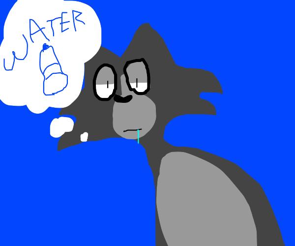 Cat wants water
