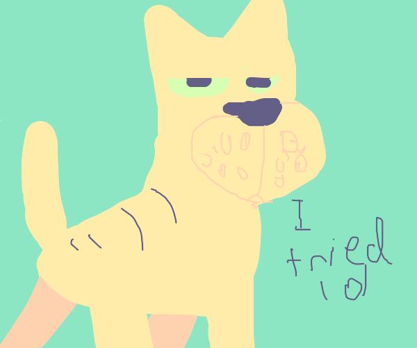 sassy Garfield