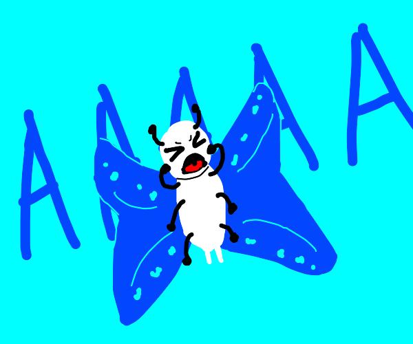 Butterfly Sreaming