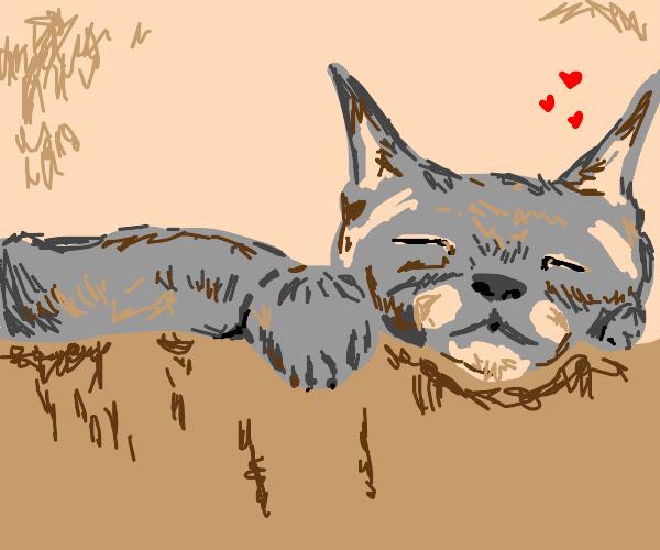 sleepy soft and warm cat :)