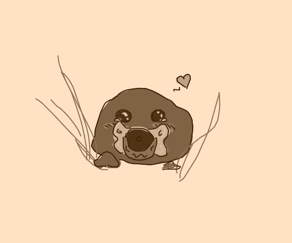 A cute baby rock