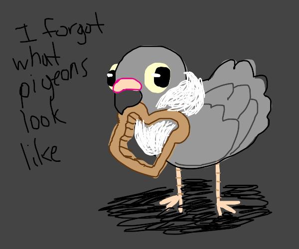 pigeon eating bread crust