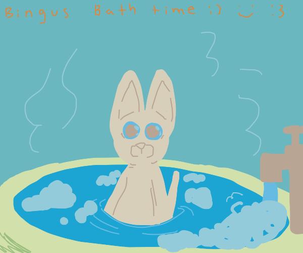 bingus takin a bath