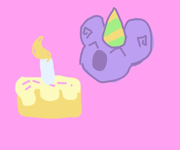 Koala's birthday!