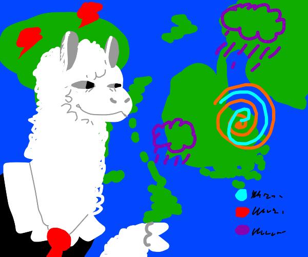 Alpaca weatherman