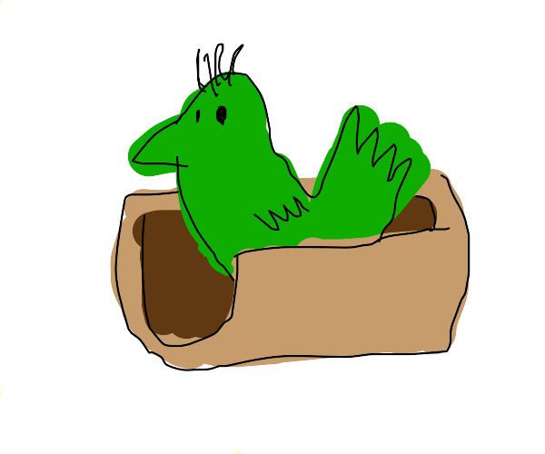 A grass bird inside off a taco