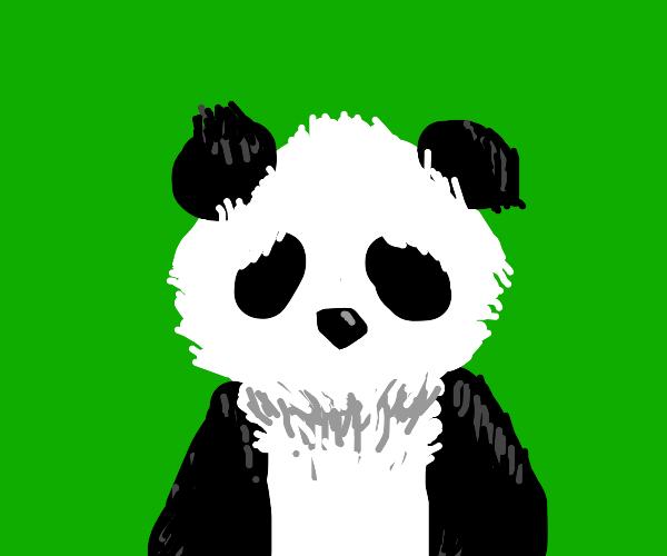 Black and white bear