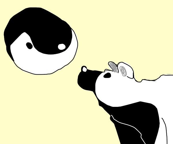 Yin Yang meets Yin Yang bear