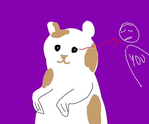 hamster staring at you