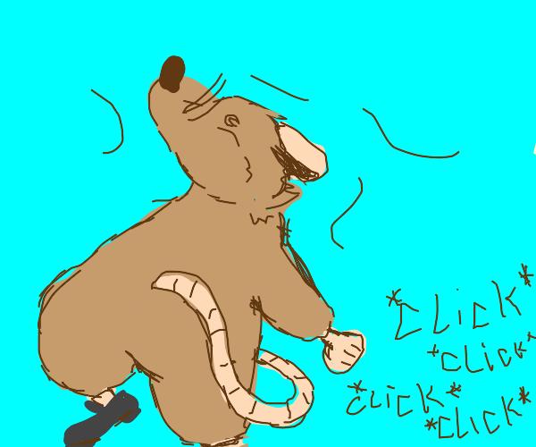Tap dancing rat