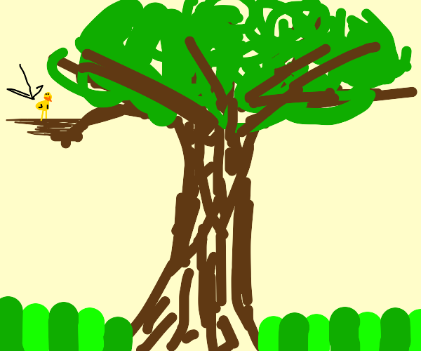 Baby bird in a tree