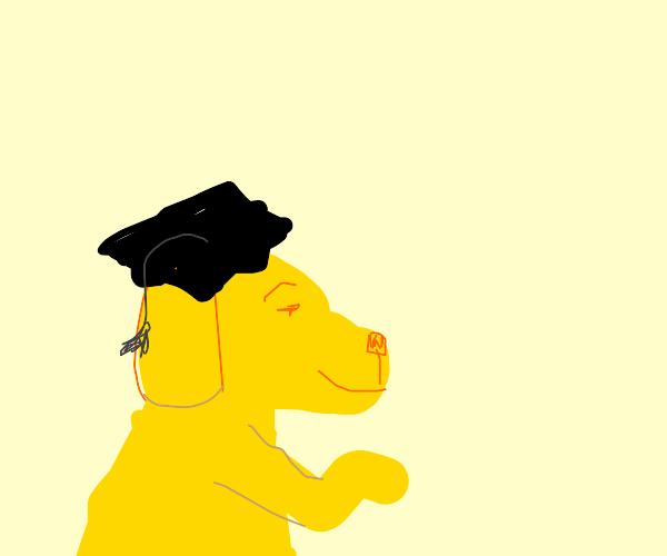 Dog has gradute