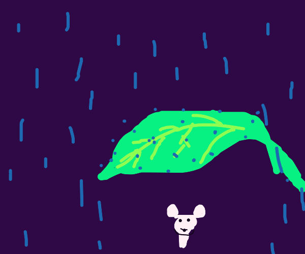 mouse under a leaf in the rain
