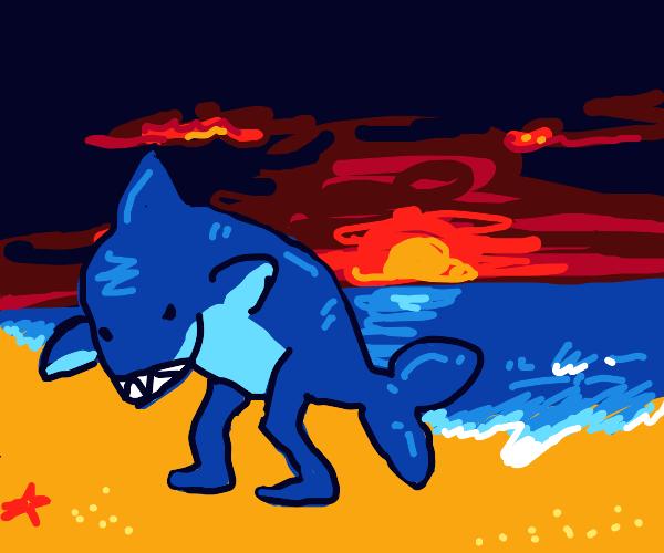 walking shark