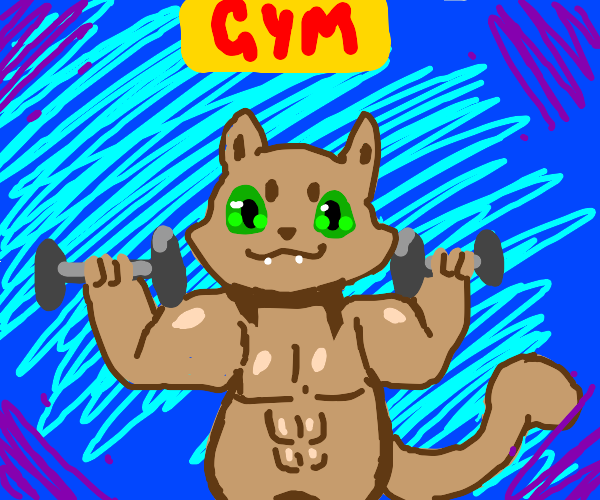 Cat at the Gym