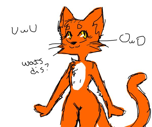 Cat furry