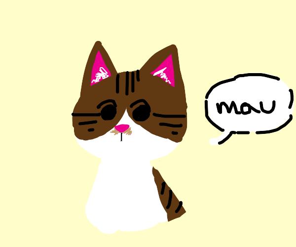 cat saying mau
