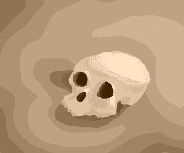 Skull half buried in sand