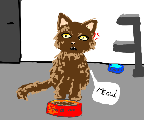 brown cat doesn't want cat food