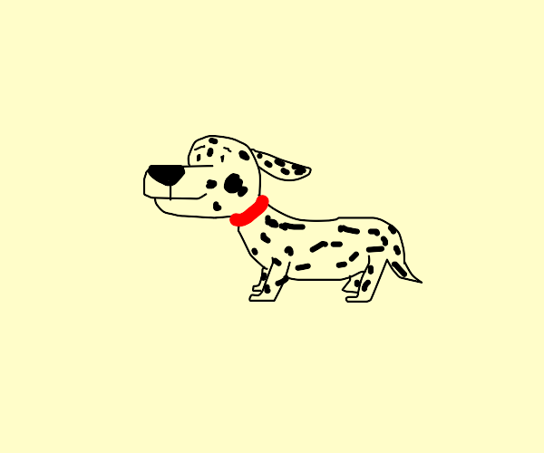 dalmation pupper