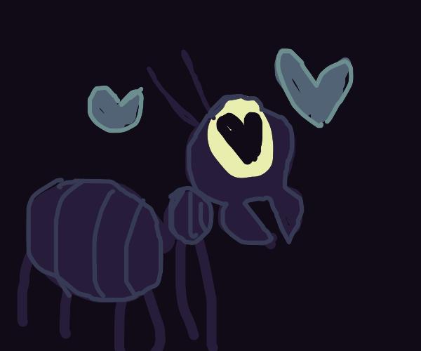 1 eyed ant loves