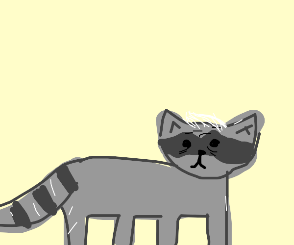 old raccoon with white hairs