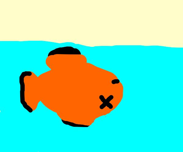 dead fish :(