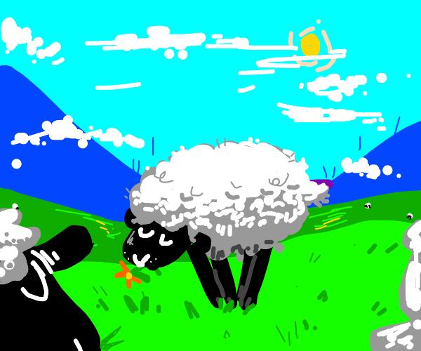 ummm ill try sum new: sheep?