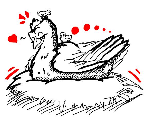 Chicken on her nest