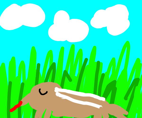 Sleeping ant-eater