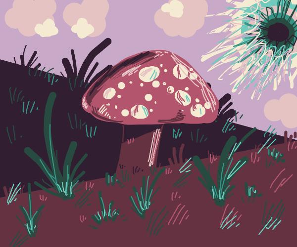 Drem mushroom