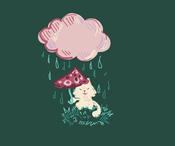 smol cat with smol umbrella