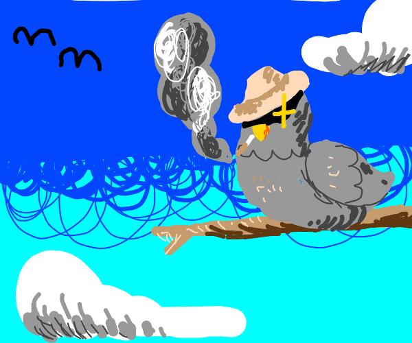 Detective bird