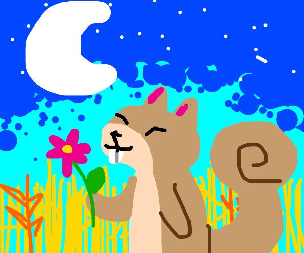 Wwheat field Blue sky Squirrel holding flower
