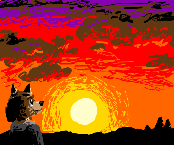 furry stares at sunset