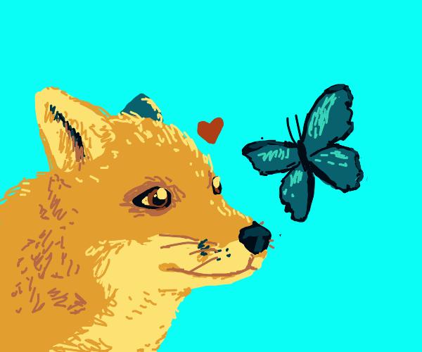 Fox likes butterfly